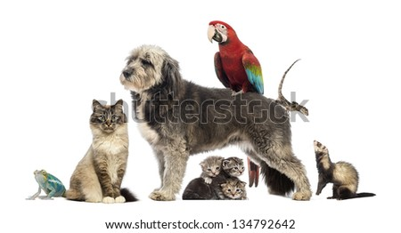 Group of pets,Group of pets - Dog, cat, bird, reptile, rabbit, isolated on white - stock photo