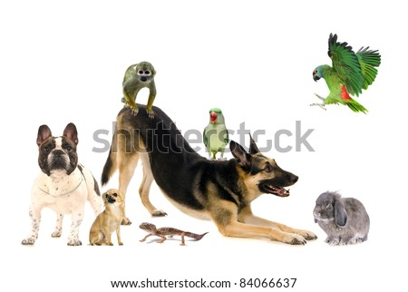 Group of pets, isolated on white - stock photo
