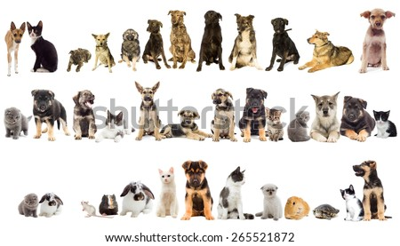 group of pets on white background - stock photo