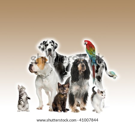Group of pets standing in front of white and brown background, studio shot - stock photo