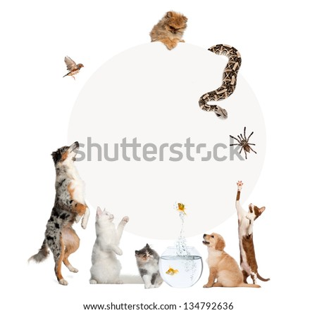 Group of pets surrounding a blank sign, isolated on white - stock photo