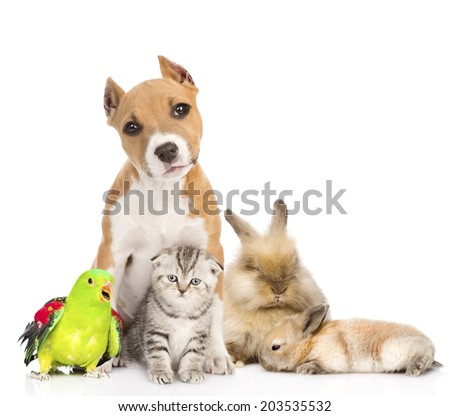 Group of pets together in front. Isolated on white background - stock photo
