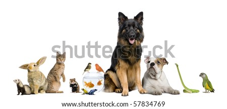 Group of pets together in front of white background - stock photo