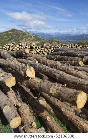 group of pine logs cut - stock photo