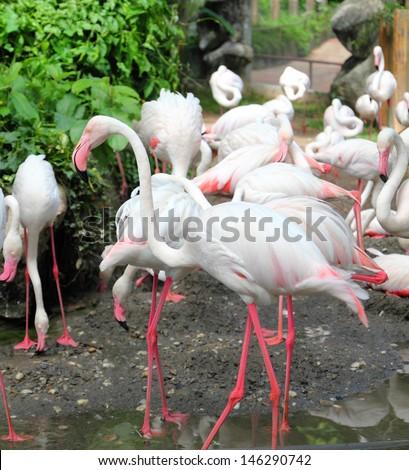 Group of pink flamingos  - stock photo