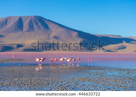 """Group of pink flamingos in the colorful water of """"Laguna Colorada"""" (Multicolored Salty Lake), among the most important travel destination in Bolivia. Roadtrip to Uyuni Salf Flat. - stock photo"""