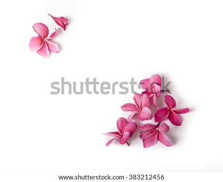 Group of Pink Frangipani isolated on White - stock photo