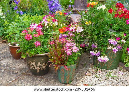 Group of plant containers with colorful summer flowers. - stock photo