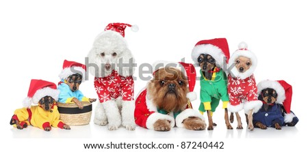 Group of puppies purebred dogs in Christmas hats on a white background - stock photo