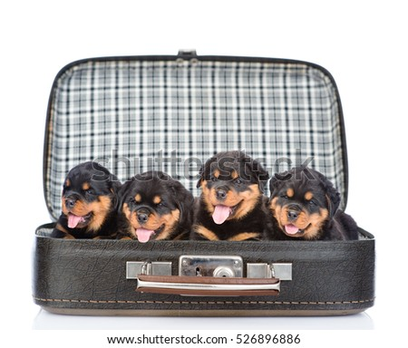 Group of puppies Rottweiler in the bag. isolated on white background