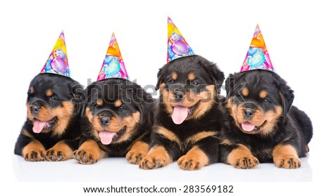 Group of puppies Rottweiler with birthday hats. isolated on white background - stock photo
