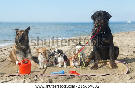 group of purebred dogs on the beach - stock photo