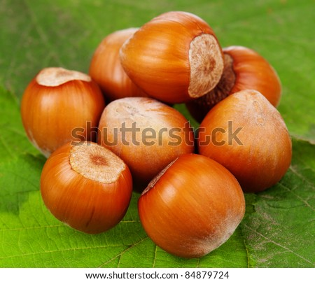 Group of ripe filberts with green leaf over white background - stock photo