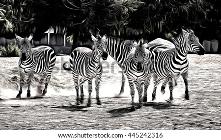 group of  running zebras drawing filter - stock photo