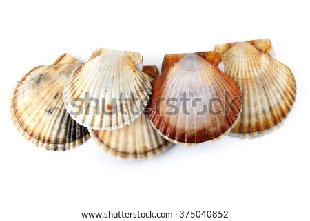 Group of scallops