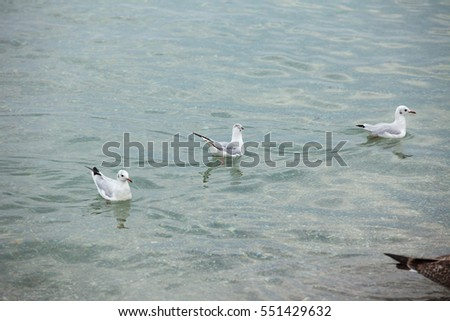 Group of seagulls floating on the sea