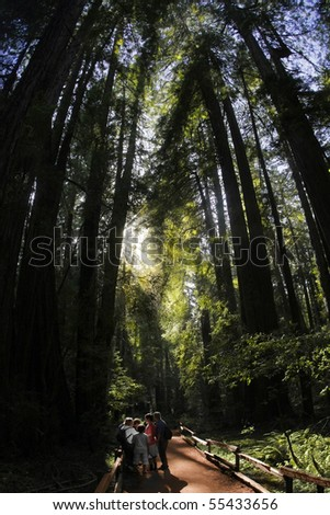 Group of silhoutted people in old redwood forest - stock photo