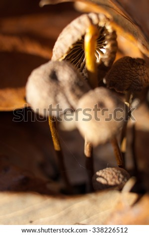 Group of small mushrooms in autumn forest. - stock photo