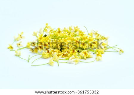 Group of Sweet osmanthus or Sweet olive flowers blossom on white background - stock photo