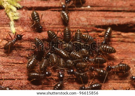 Group of termite - stock photo