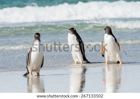 Group of the penguins in the Atlantic Ocean