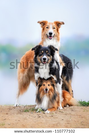 group of the three happy dogs - stock photo