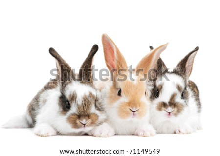 group of three baby light brown rabbits with long ears isolated on white - stock photo