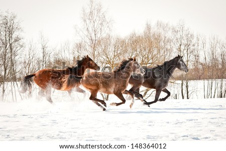 Group of three horses running in winter - stock photo