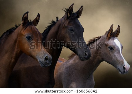Group of three young horses on the pasture  - stock photo