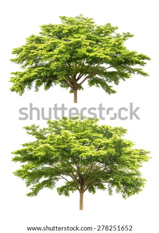 Group of tree isolated on white background for design material - stock photo
