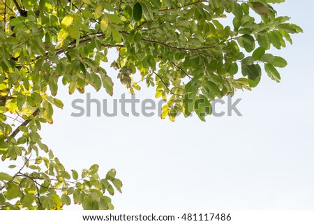 group of treetop and sky