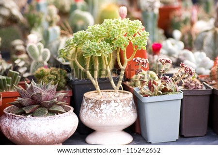Group of various succulents in pots - stock photo