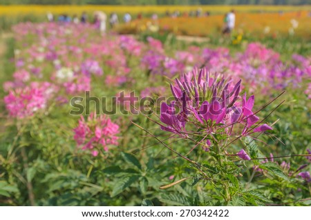 group of vibrant flowers in daylight - stock photo