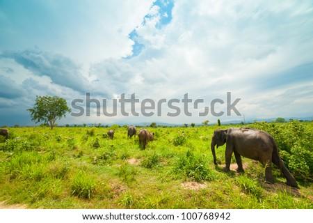 Group of wild elephants in Uda Walawe National Park, Sri-Lanka - stock photo