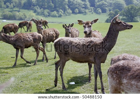 group of young deer on walk by bright spring day - stock photo