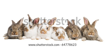 group of young light brown and spotted rabbits sitting in a raw isolated on white - stock photo