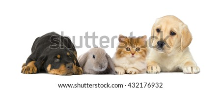 Group of young pets isolated on white - stock photo