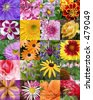 grouping of several florals - stock photo