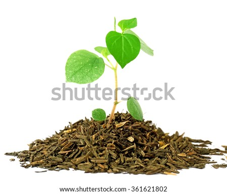Growing a plant in soil isolated on white background - stock photo