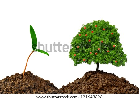 Growing apple tree isolated on white background - stock photo