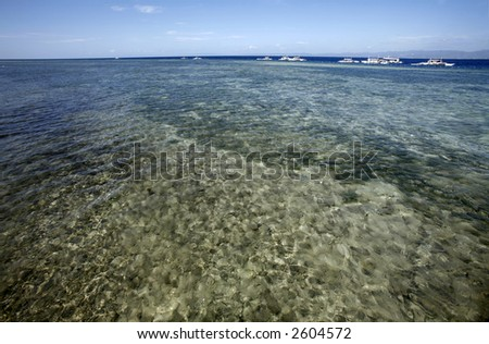 Growing corals. - stock photo