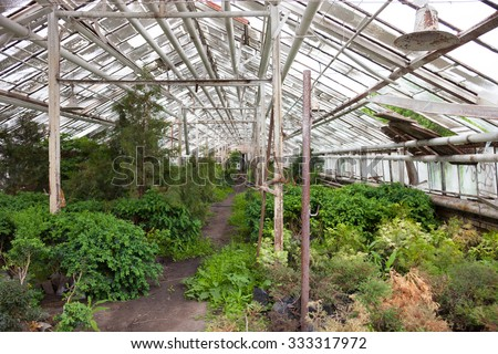 Growing different plants in the old greenhouse. - stock photo