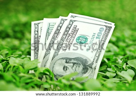 Growing dollars. Selective focus. - stock photo