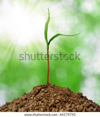 Growing green plant - stock photo