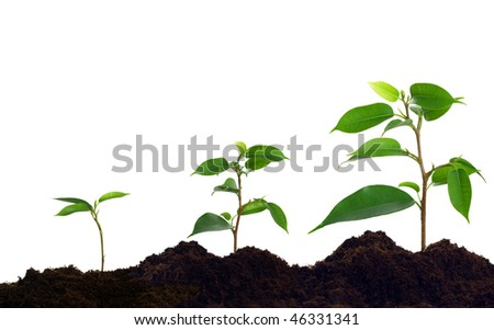 Growing green plant in soil