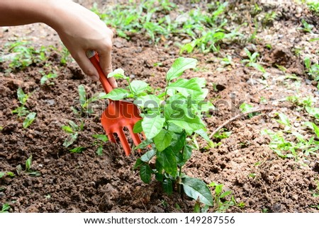 growing hands  a green young plant. Symbol of spring and ecology concept. - stock photo
