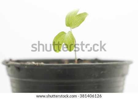 Growing plant in flower pot isolated on white background