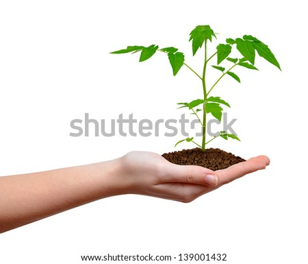 growing plant in hand isolated on white - stock photo