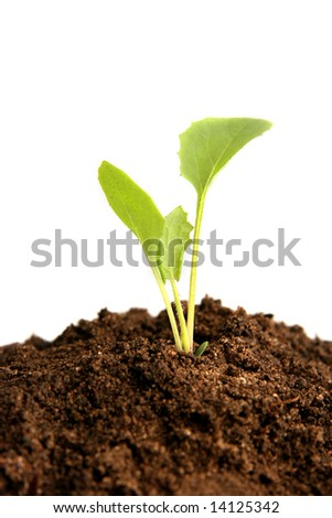 Growing plant in soil
