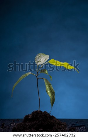 Growing plant in the ground over blue background - stock photo